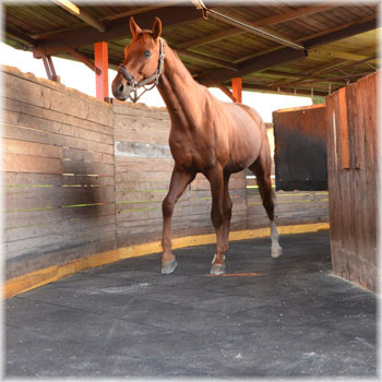 Rubber tiles - ideal solution for stables